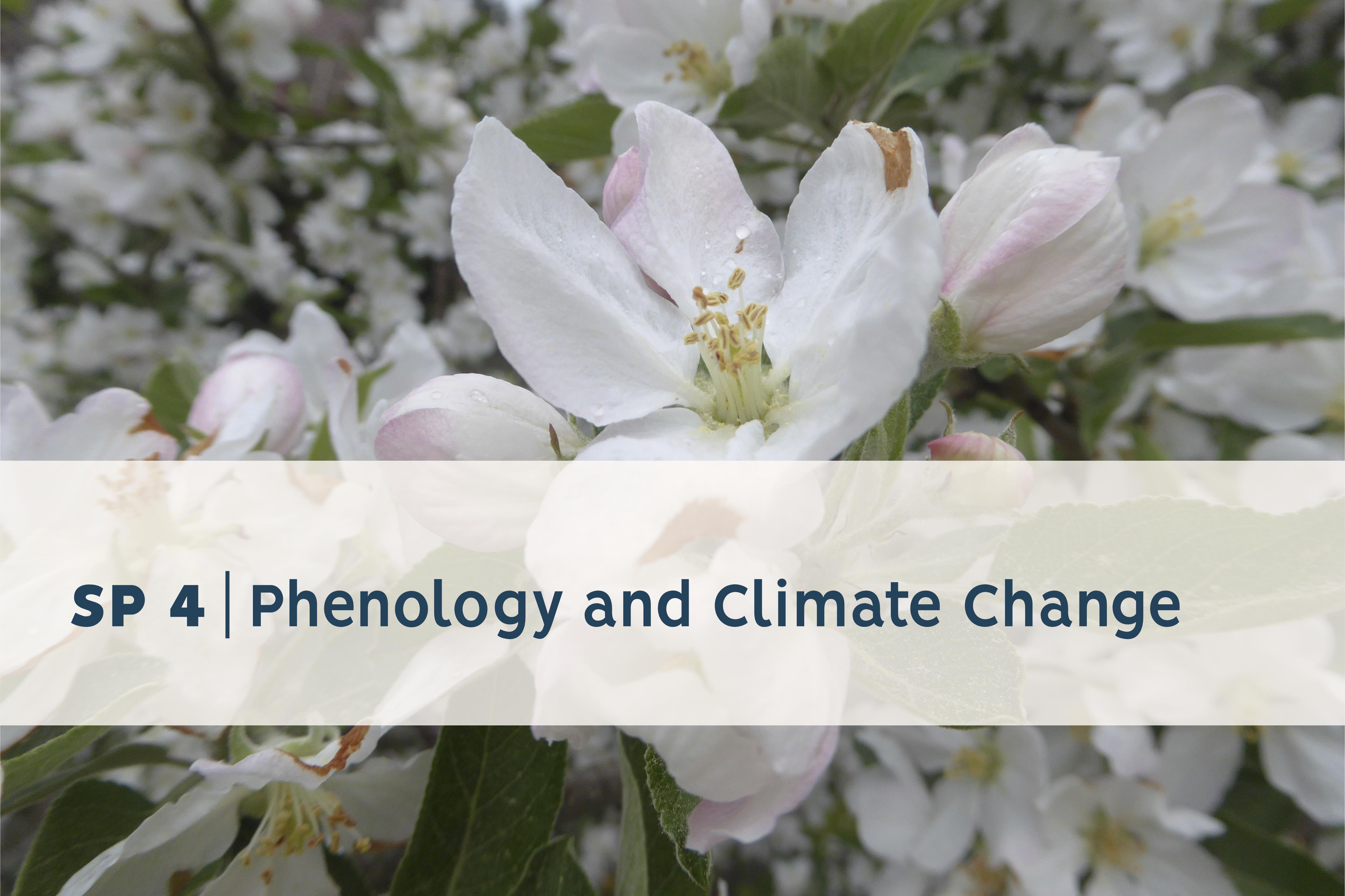 Phänologie als Bioindikator