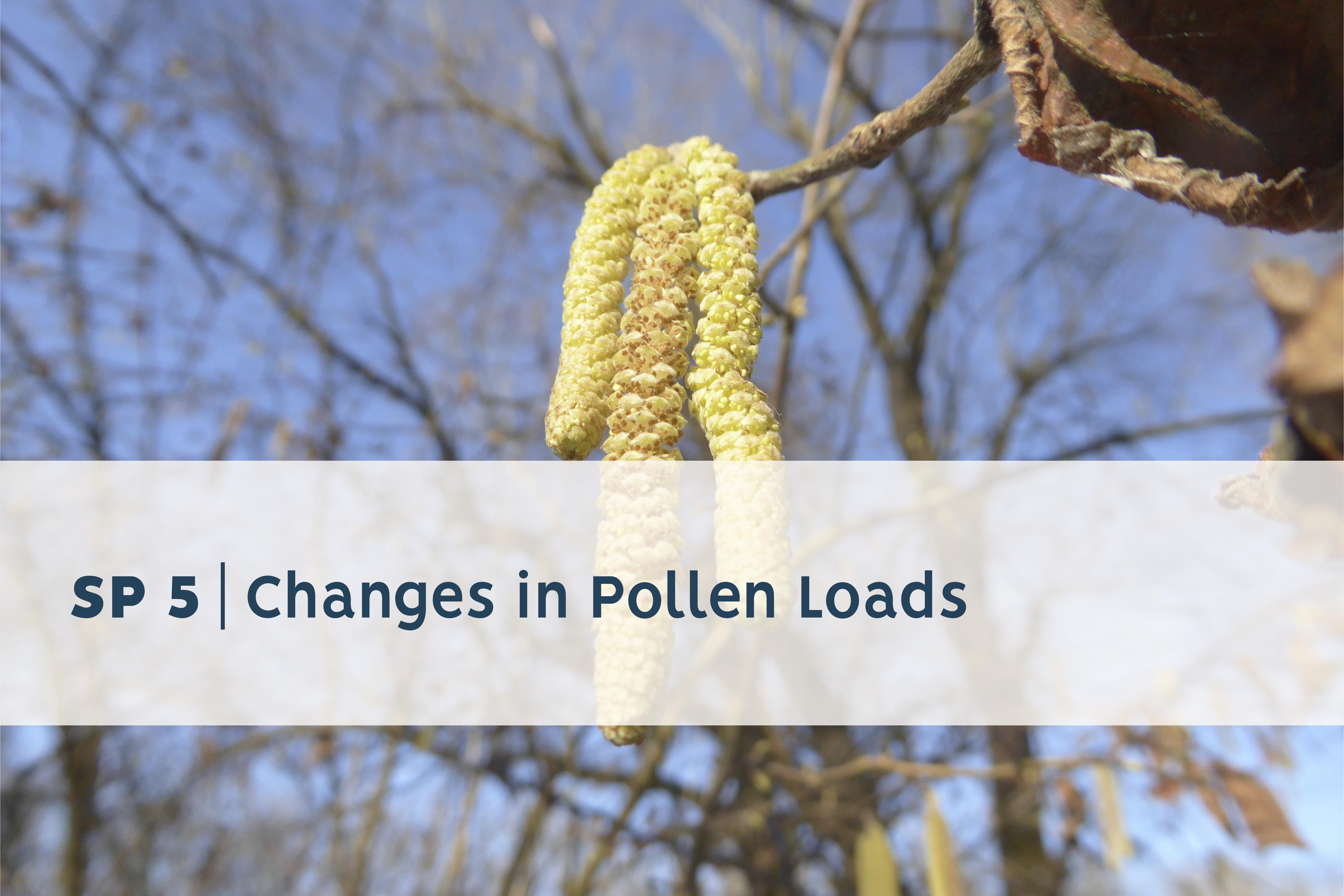 Pollenbelastung