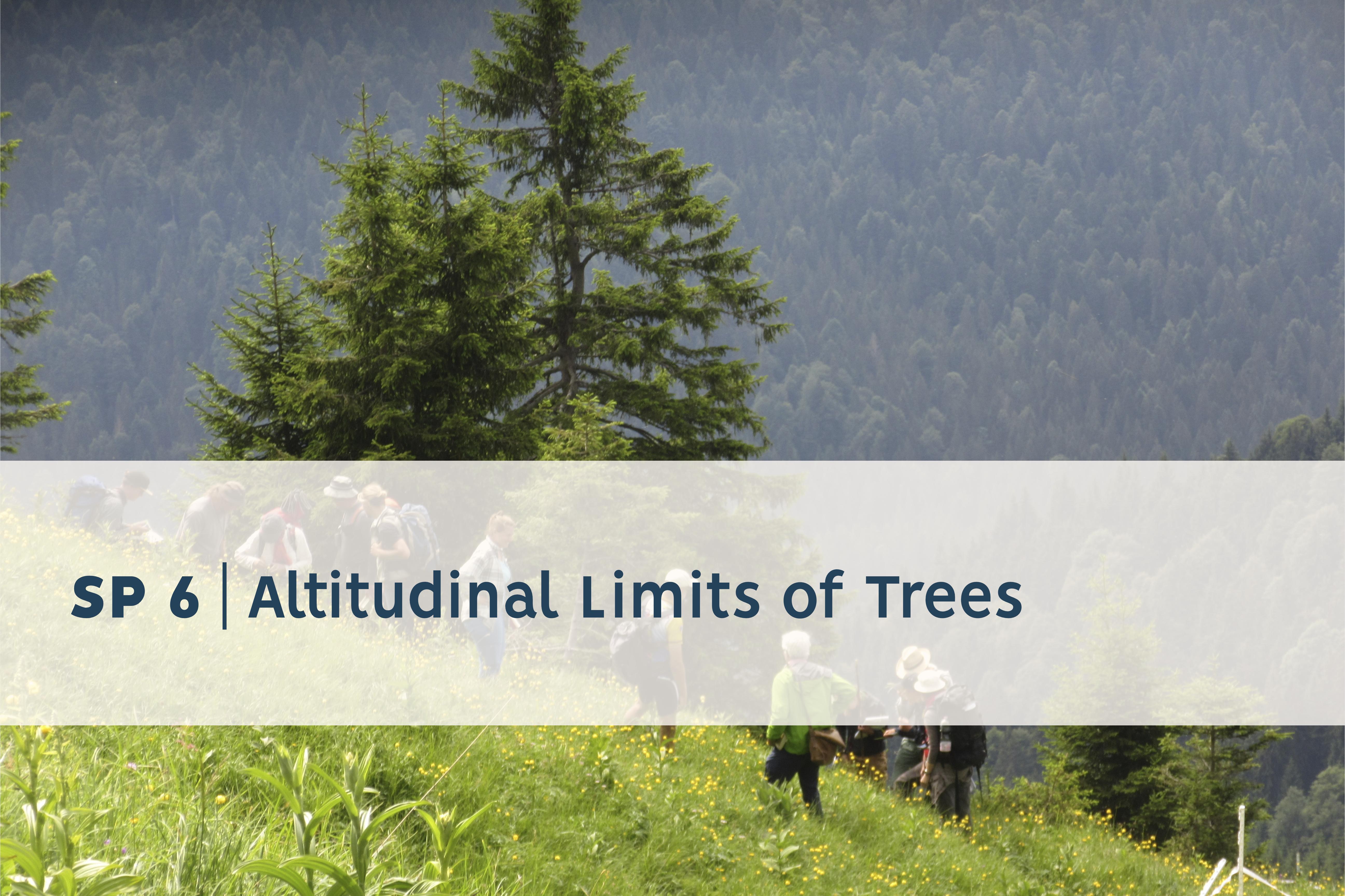 Baumgrenzen in der Höhe