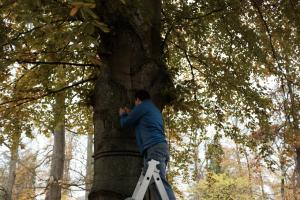 Montage der Sensoren am Baum 4.0 in Eichstätt