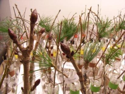 Zweigexperiment in einem Labor