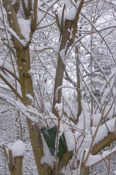Baum mit Schnee